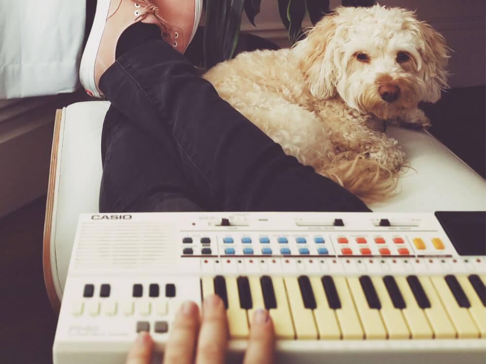 dog listening to piano keyboard
