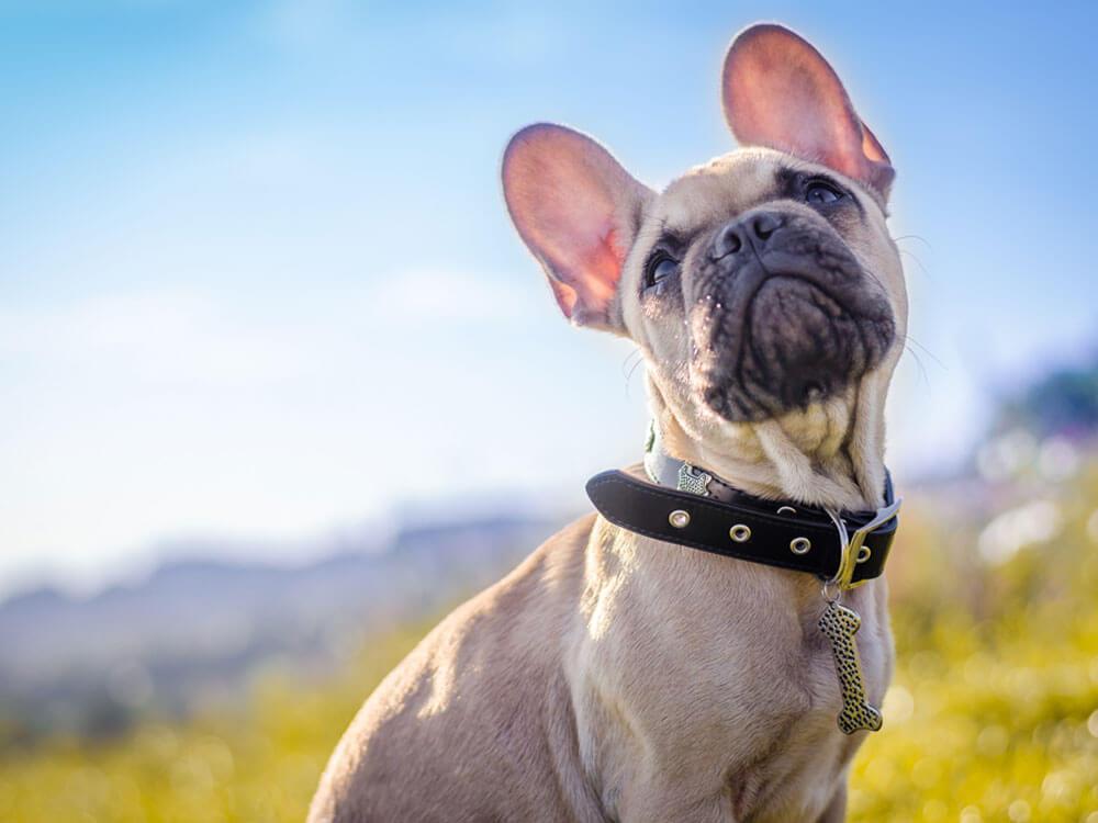a dog sitting in a grass field
