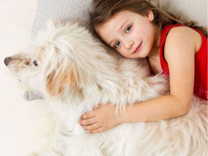 5 Incredible Reasons Why You Should Let Your Dog Sleep in Your Bed