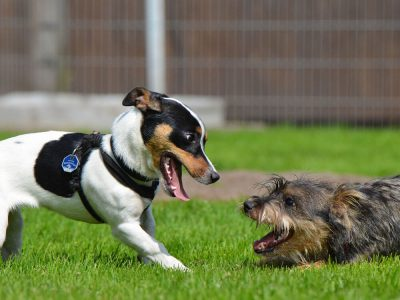 Solutions for Dogs Not Getting Along