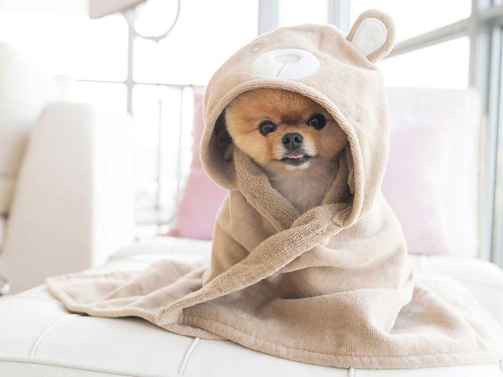 The Most Famous Dogs in the World of Social Media