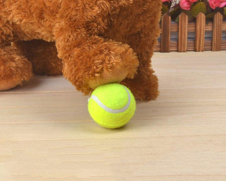 a Flyball ball played by a dog