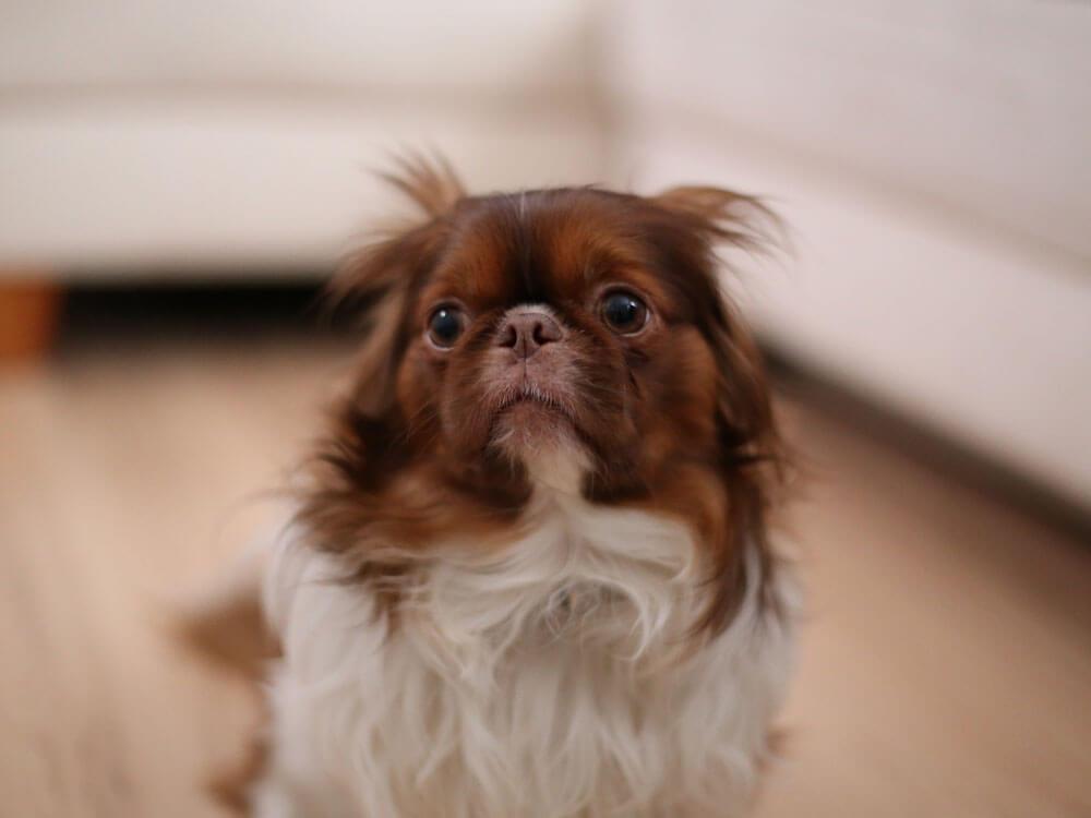 an afraid dog due to fireworks