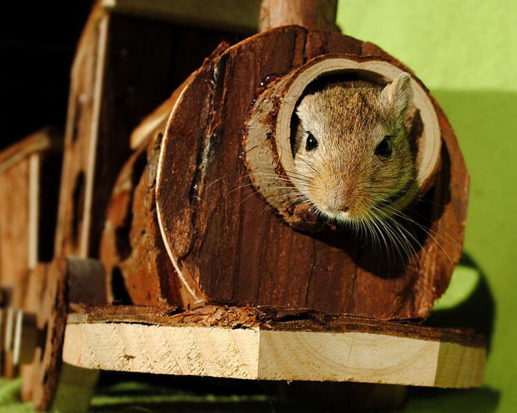 gerbil playing inside a mini wood house