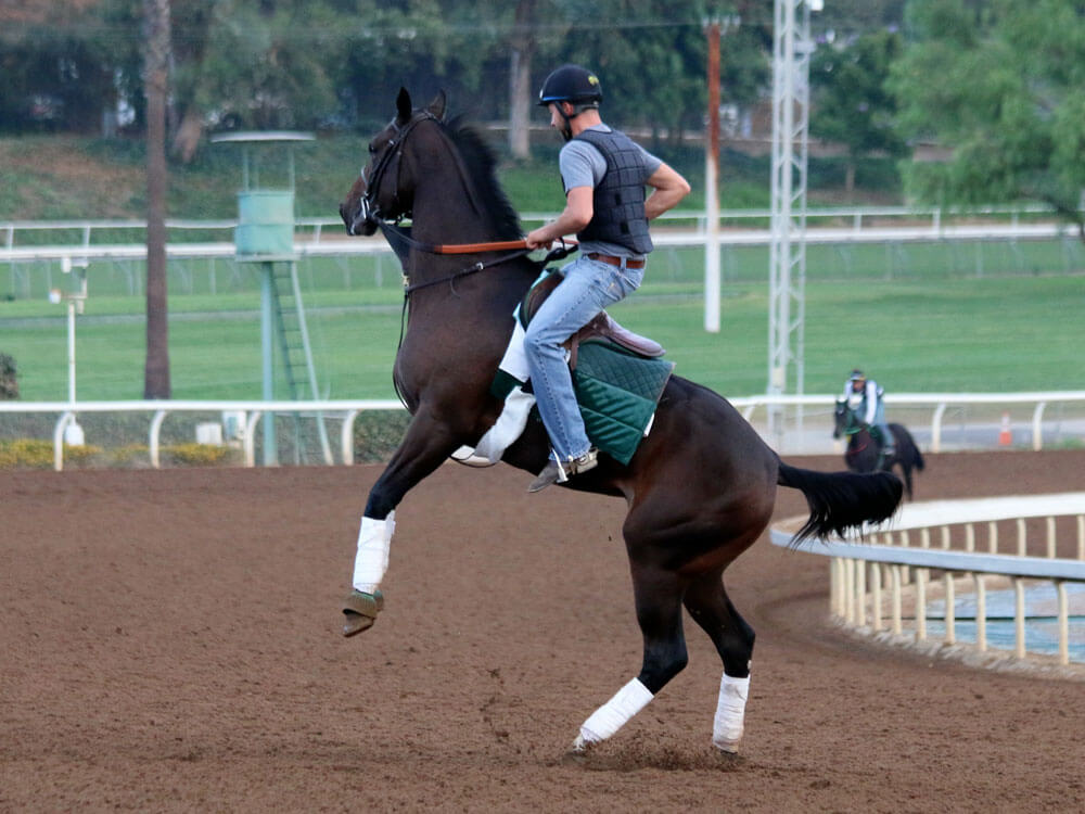 horse rearing up with a rider