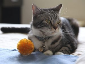 What Are the Best Interactive Cat Toys?