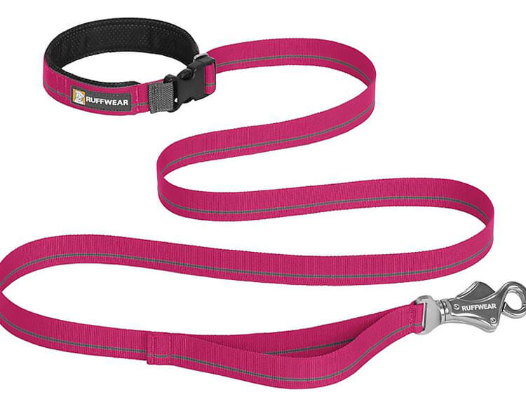 leash, useful during dog training