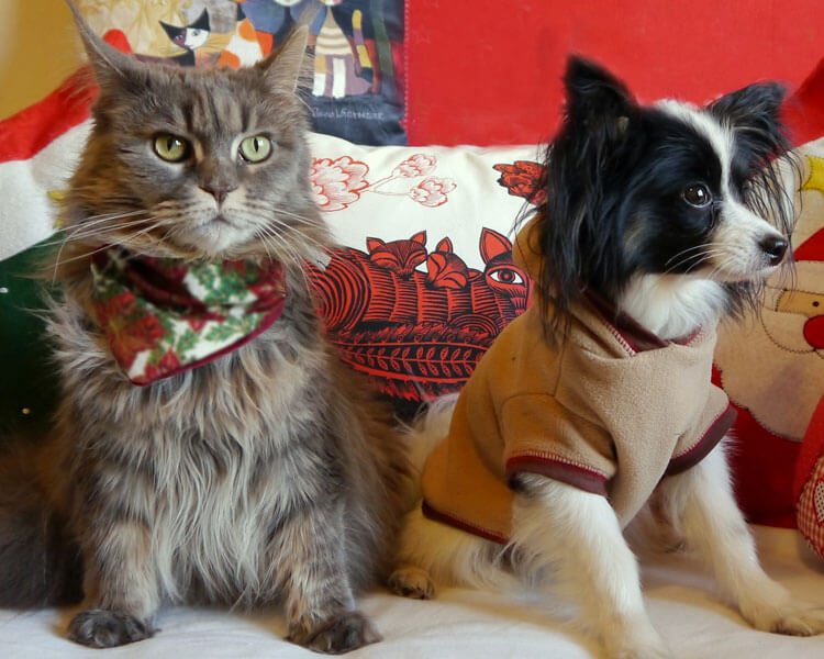 maine coon and a dog sitting in a couch