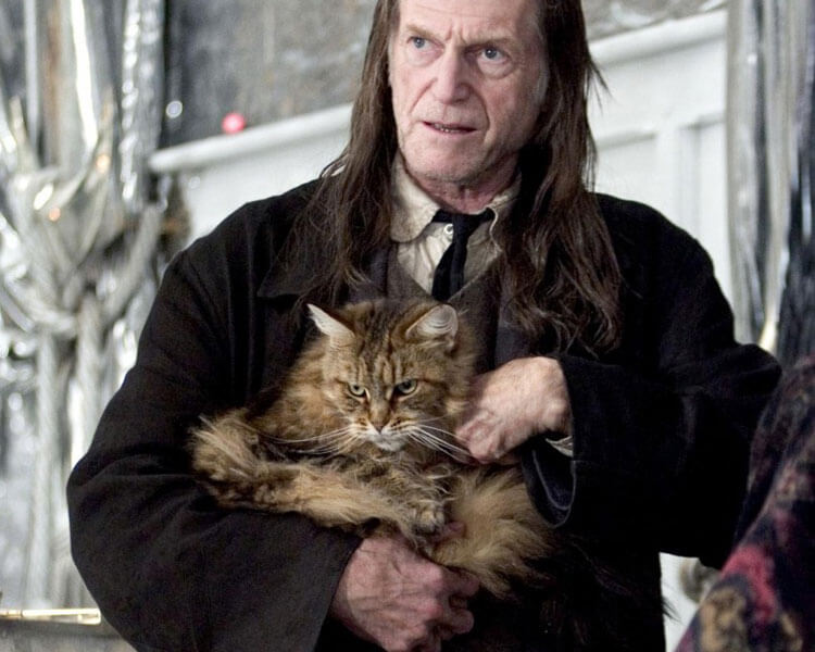 maine coon in a harry potter movie