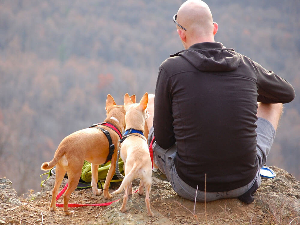 a man with dogs, hiking together in the mountain