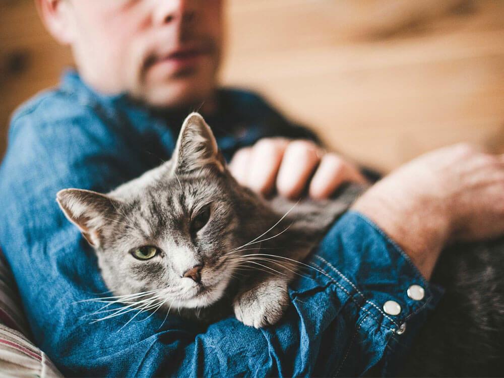 cat microchipping