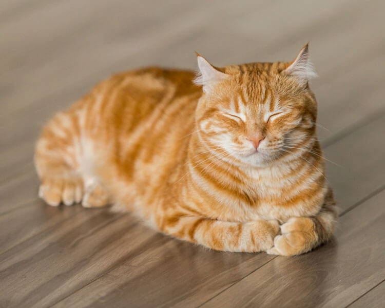 an old cat lying on the floor