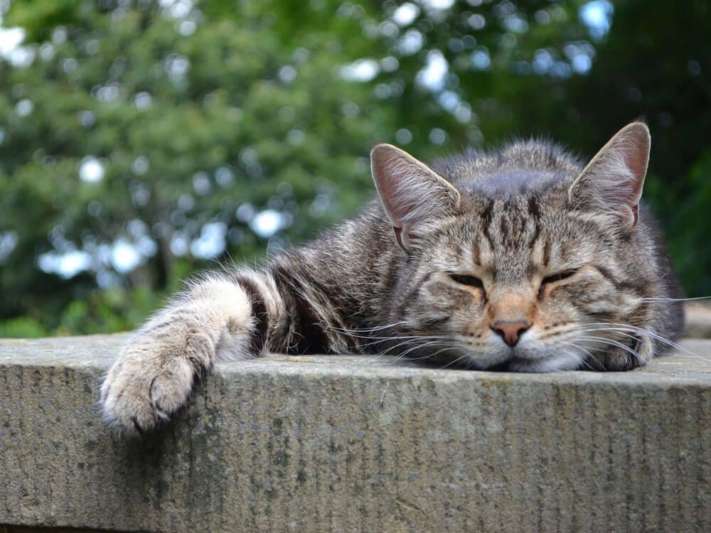 managing cats with pancreatitis