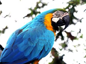 Parrot Training Tips for Beginners