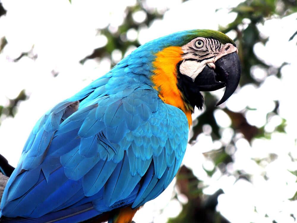 Parrot Training Tips for Beginners