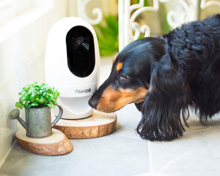 Wi-Fi pet camera for your dog at home
