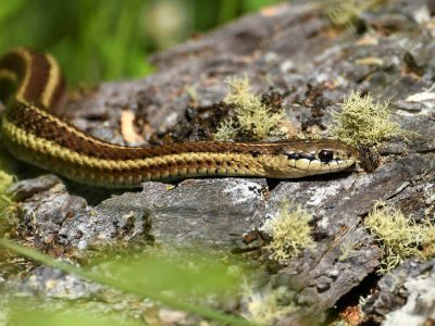 Having a Snake as Pet