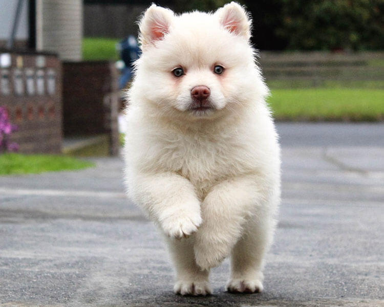 a white puppy running on the road