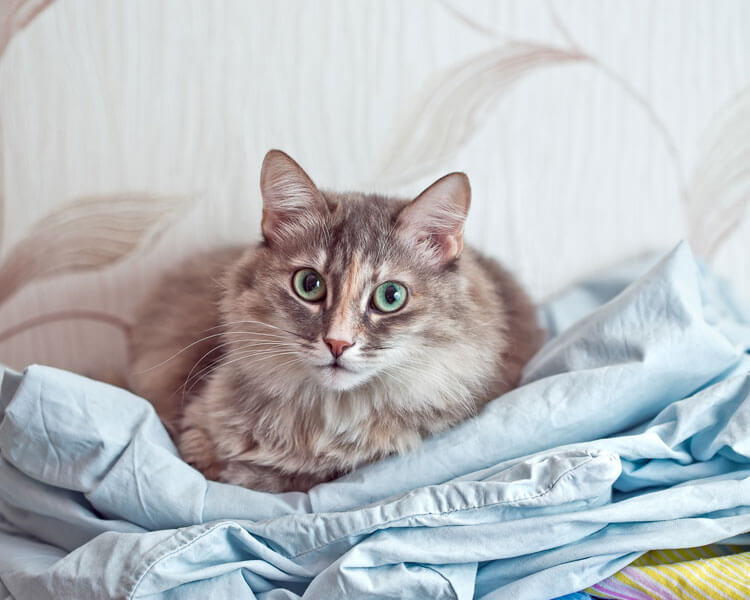 a sick cat lying down in its bed