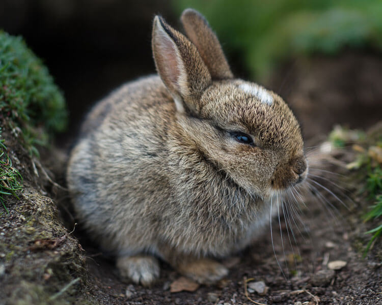 a sick small bunny in the grass field