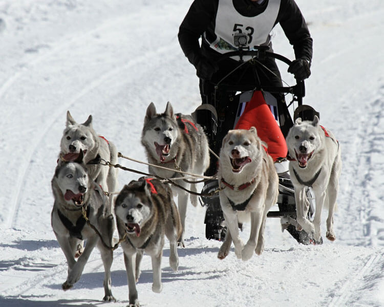 a group of sled dogs running in a snowy mountain