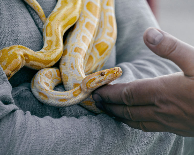a pet snake in a mans arm