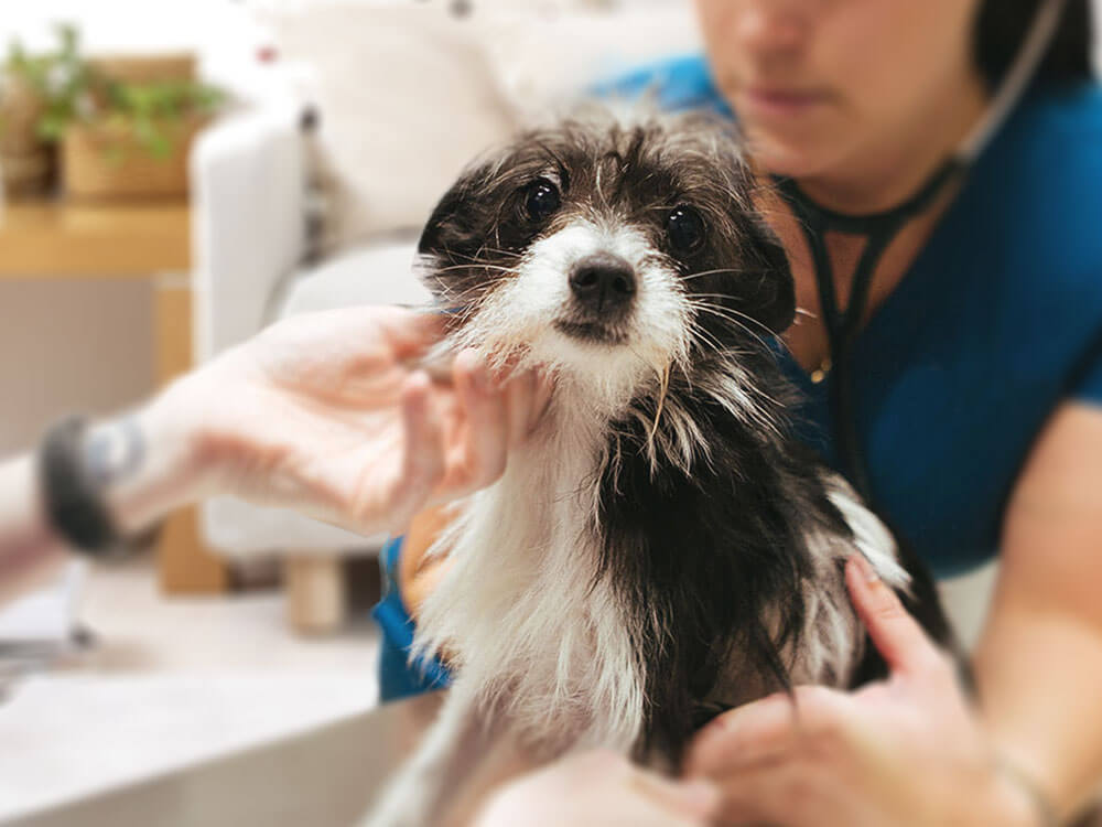 opt for a mobile vet