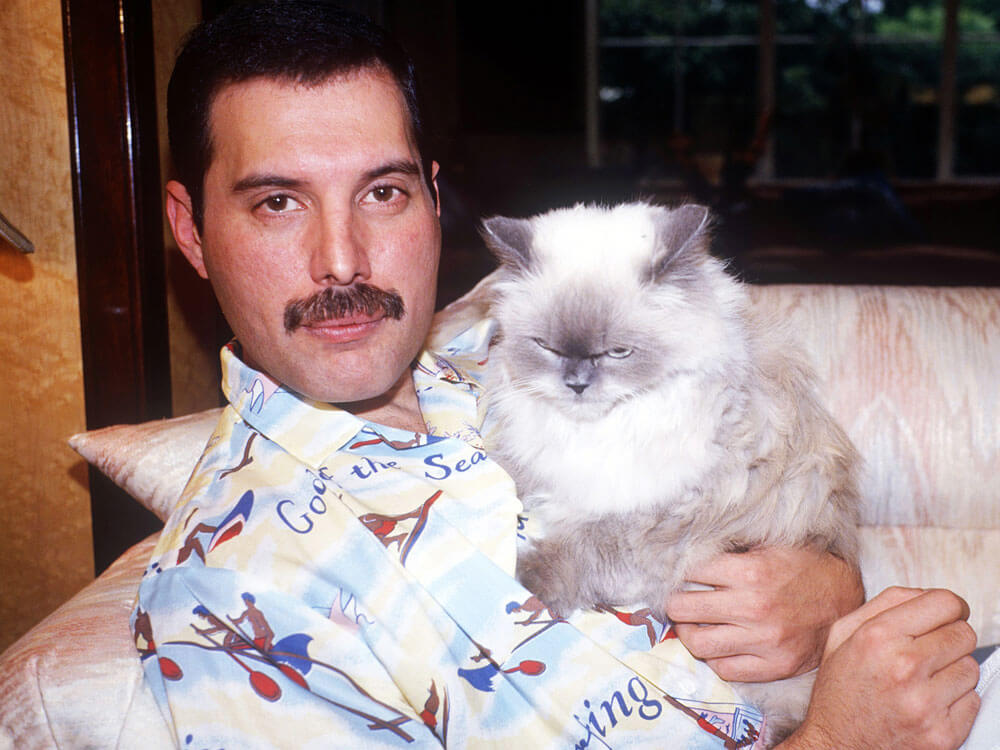Freddie Mercury and his love for cats