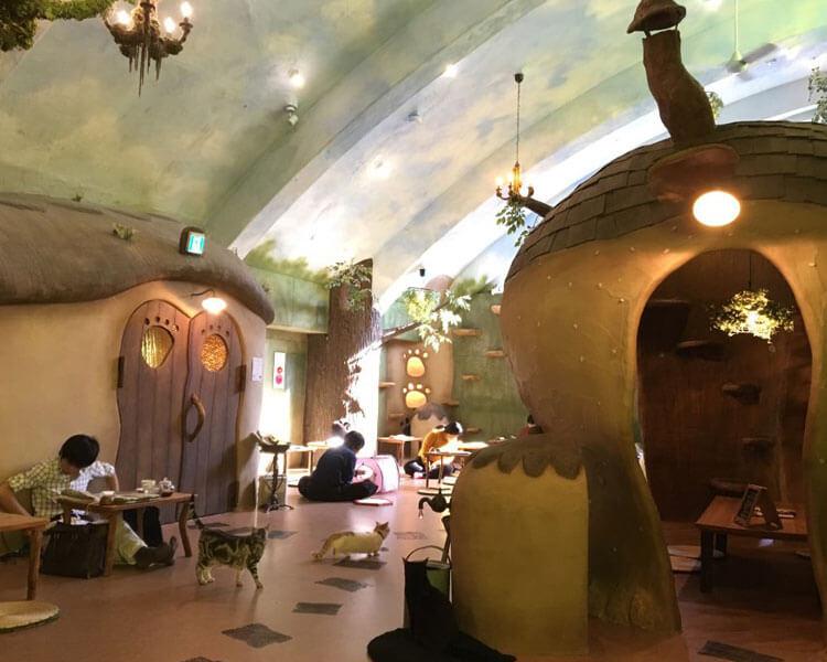 emari no Ouchi, a cat café in Tokyo, Japan