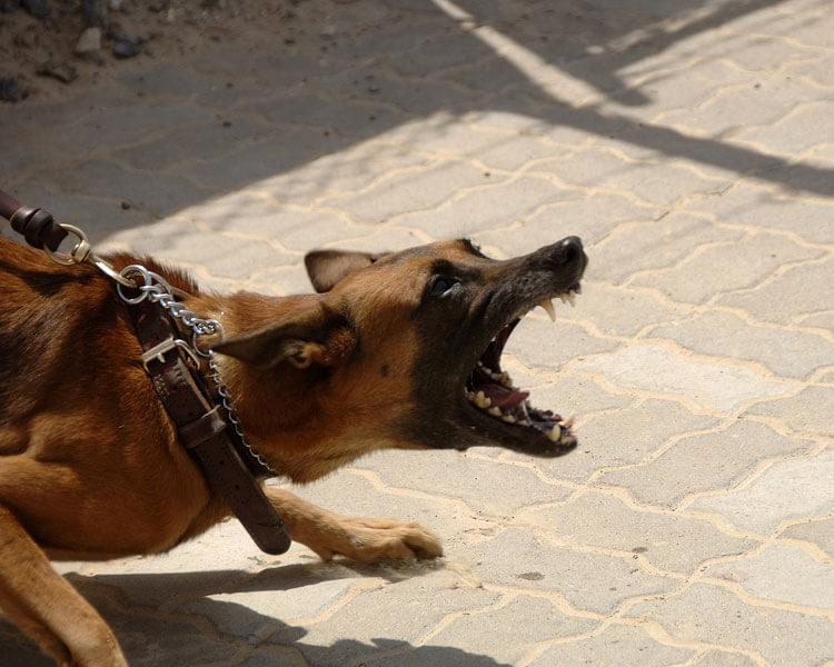 dog muzzle - 5