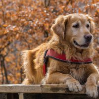 Alopecia in Dogs: Home Remedies