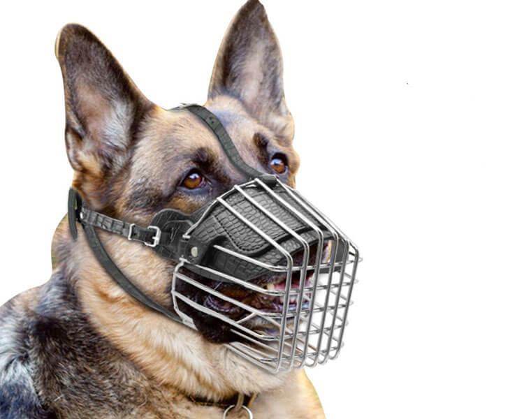 dog muzzle - 3