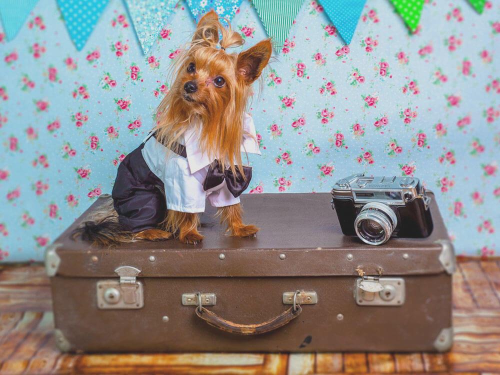 a dog near a camera sitting above a luggage