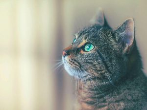Causes and Signs of Aggressive Cat Behaviour