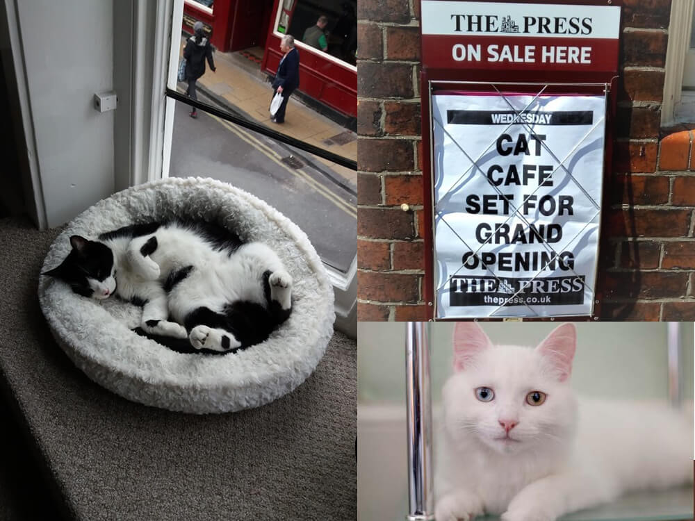 the first cat café in york