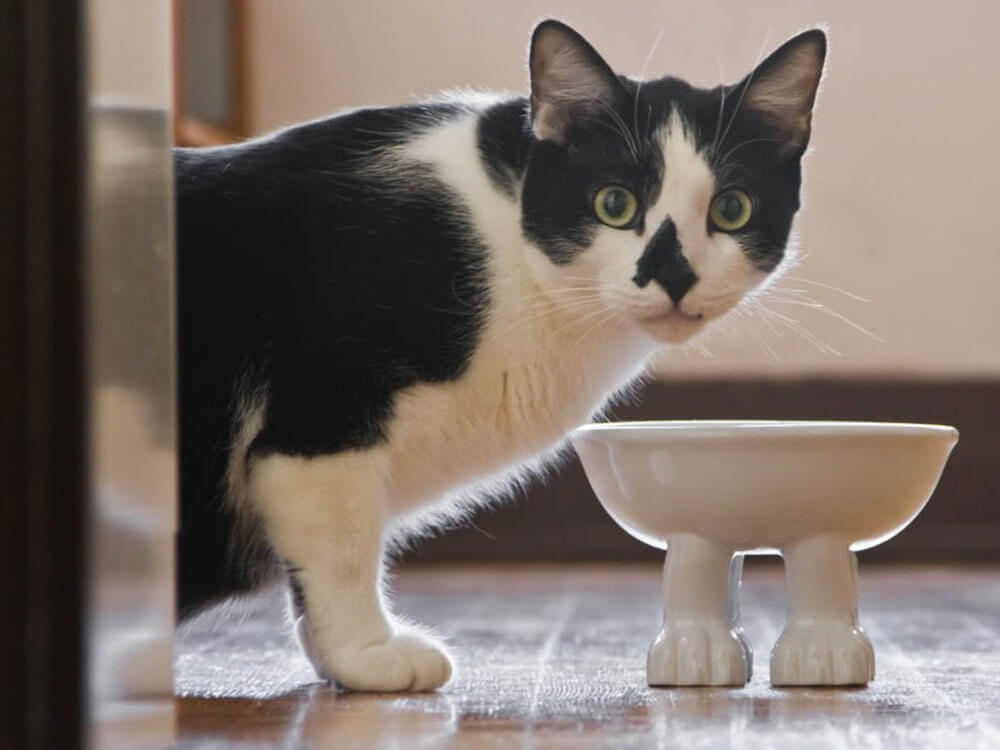 Cat Dietary Nutrition Guide