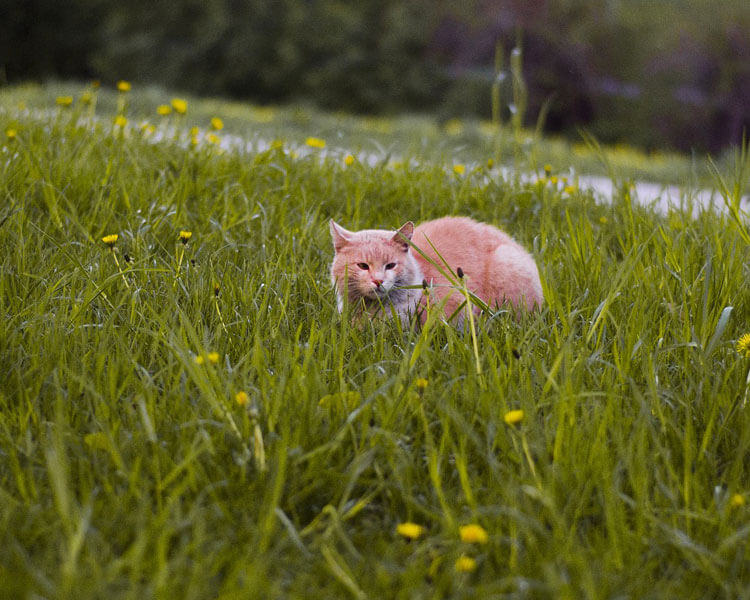 a cat walking in the grass field