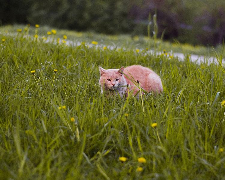 a cat walking in the grass field