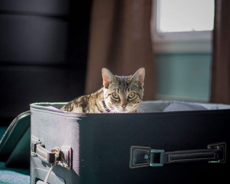 a cat inside a luggage