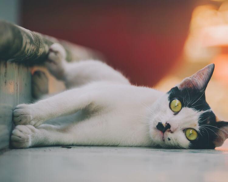 cat lying on a dirty floor
