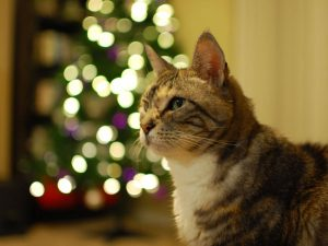 Tips on How to Cat Proof Your Christmas Tree