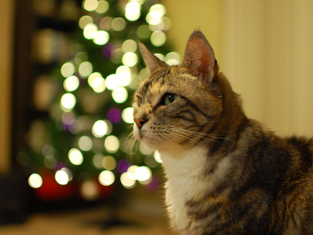 Cat Proof Christmas Tree.How To Have A Cat Proof Christmas Tree Uk Pets