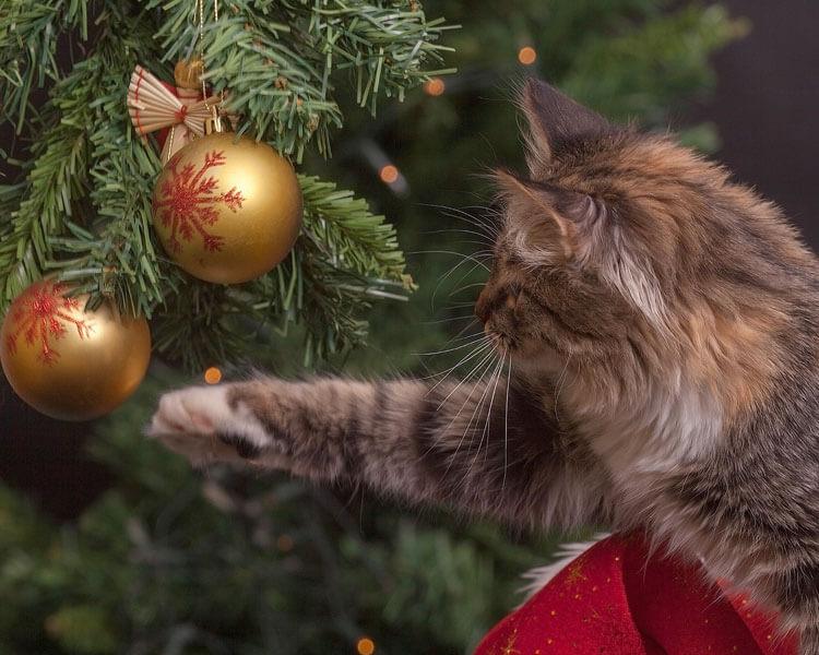 cat reaching christmas balls