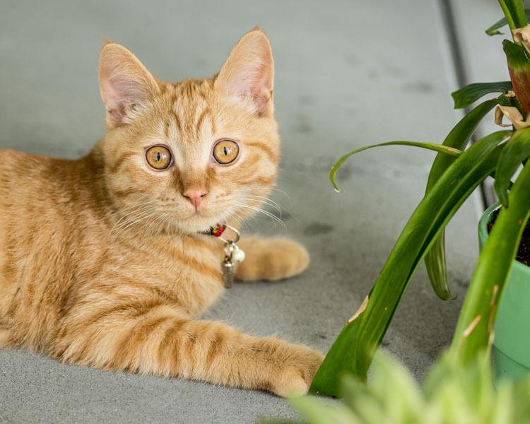 cat sitting near a plant