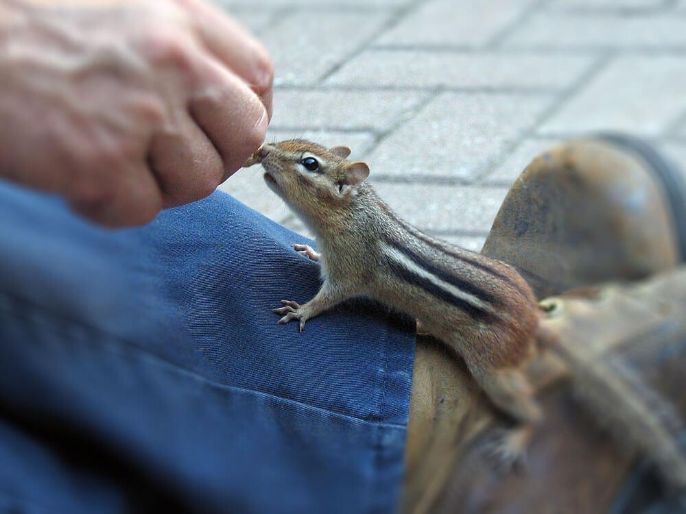 a chipmunk crawling in a man's leg