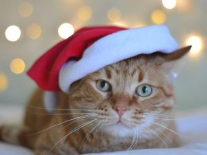 German Animal Shelters Take a Stand Against Christmas Pet Adoption