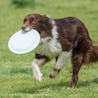 Dog Breed Comparison: What to Consider When Choosing a Breed