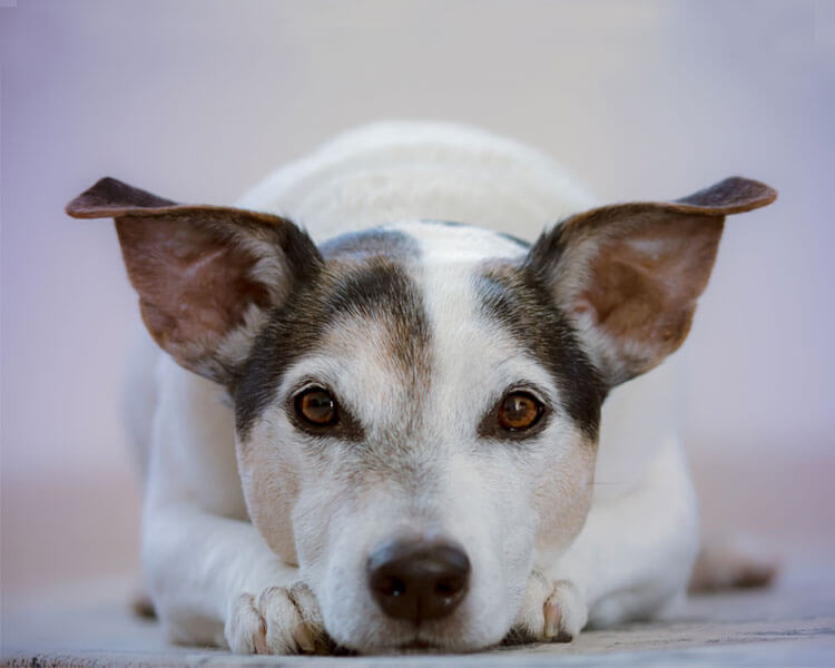 a dog with some health disease, lying down on the floor
