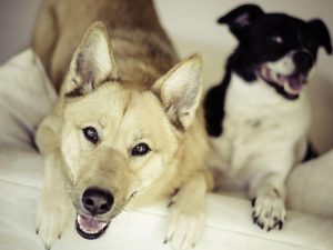 Dog Mounting: The Whys and How to Stop It