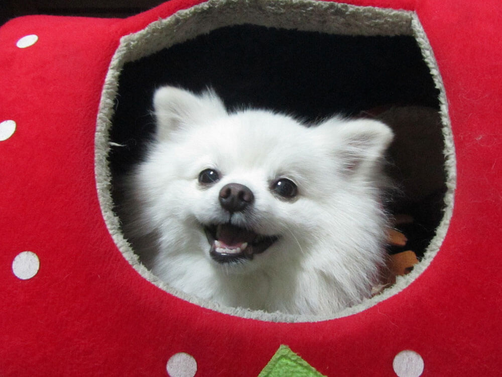 Owners Opt for Dog Rehoming